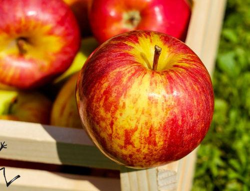 Giornata di Raccolta delle mele
